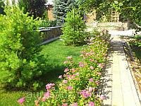 Разбивка декоративного и плодового сада