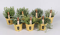 Пряный микс  -- Herbs  P15/H30
