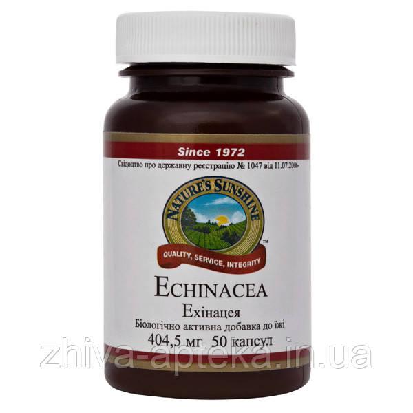 Echinacea Эхинацея