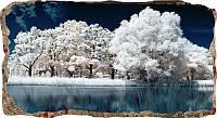 Светящиеся 3D обои Startonight Замерзшие деревья