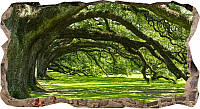 Светящиеся 3D обои Startonight Старые деревья