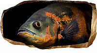 Светящиеся 3D обои Startonight Рыба знает все, фото 1