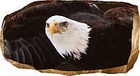 Светящиеся 3д Фото Обои Startonight Мир Животных Американский орел Декор стен Дизайн дома Интерьер