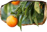 Светящиеся 3D обои Startonight Апельсин