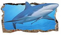 Светящиеся 3D обои Startonight Дружелюбная акула