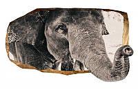 Светящиеся 3д Фото Обои Startonight Мир Животных Слон Декор стен Дизайн дома Интерьер