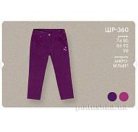 Штаны для девочек Бемби ШР360 микровельвет 80 цвет малиновый