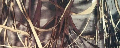 Ткань Дюспо бондинг-флис лес Собственное производство