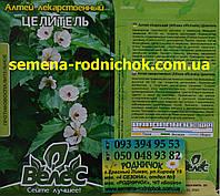 Алтей лекарственный сорт Целитель многолетнее травянистое растение из семейства Мальвовые
