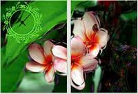 "Модульная картина-часы (100х70 см) ""Орхидея"""