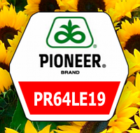 Подсолнух PIONEER P64LE19