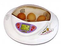 Инкубатор R-com Mini pro (обучающий)