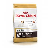 JACK RUSSEL JUNIOR 1.5 кг