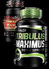 Tribulus Maximus (90 табл.) BioTech USA, фото 3
