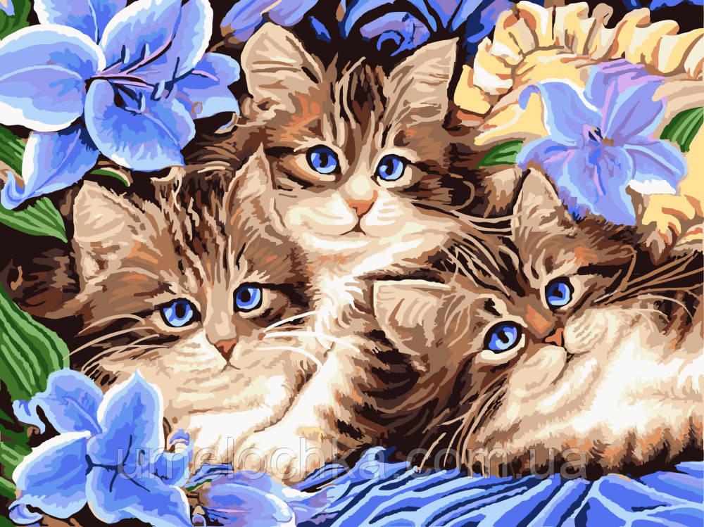 Холст по номерам без коробки Котята в цветах (BK-GX3071) 40 х 50 см