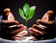 Услуги по уходу за растениями