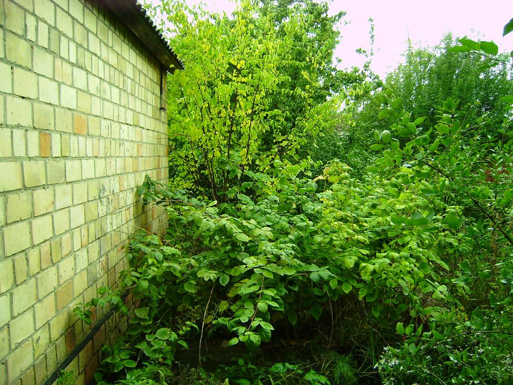 Спил, удаление кустов и кустарников