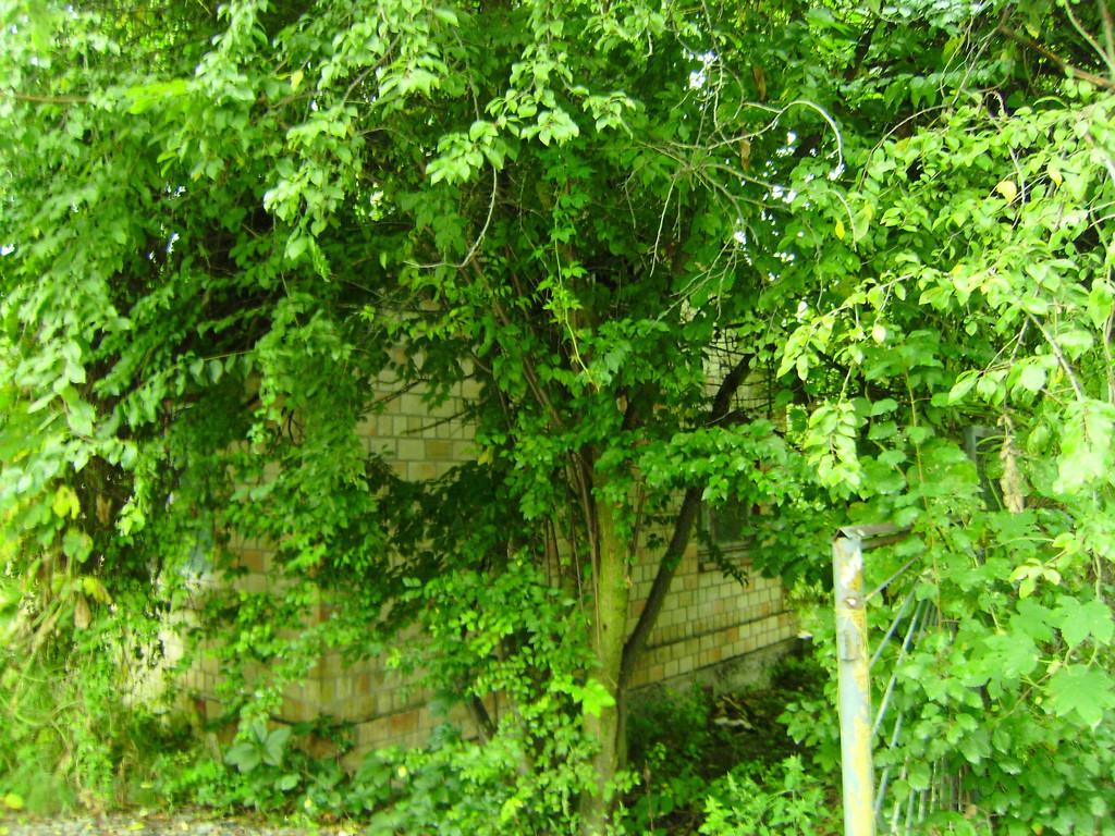Удаление растительности на территории земельного участка