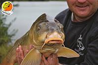 Отчет о рыбалке на бойлы тм Карпуша