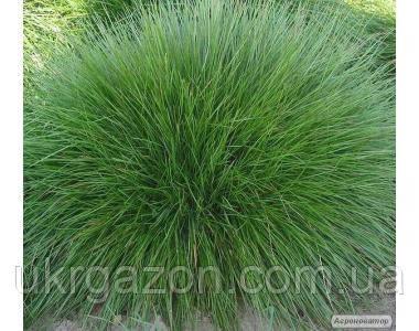 Травосмеси для газонов от 5 кг