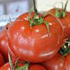 БЕРИЛ F1 - насіння томату, Rijk Zwaan 100 насінин