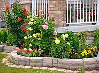 Лучшее украшение для сада: розарий