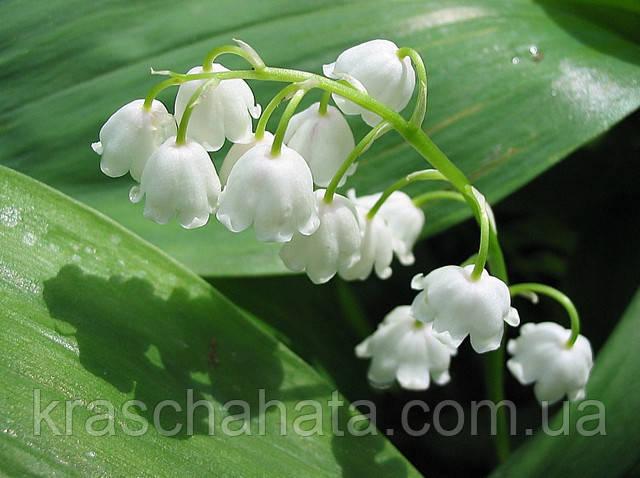15 самых первых цветов в саду, Идеи для дома, Дача сад