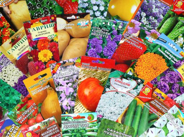 Семяна, травы, растения, вазоны