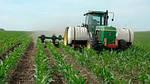 Особенности внесения удобрения на кукурузе