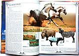 Коні. Ілюстрована енциклопедія, фото 2