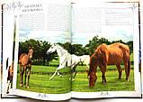 Коні. Ілюстрована енциклопедія, фото 3