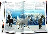 Коні. Ілюстрована енциклопедія, фото 4