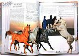 Коні. Ілюстрована енциклопедія, фото 8