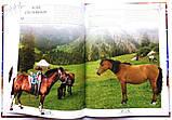 Коні. Ілюстрована енциклопедія, фото 10
