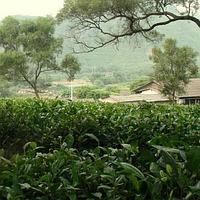 Гуандун (Гуандунские улуны)