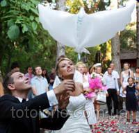Био Голуби свадебные, шар биоголубь белый