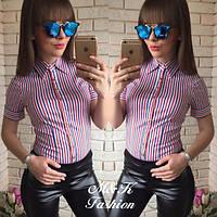 Рубашка боди женская стильная в полоску,модная одежда