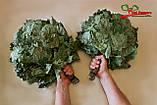Веники для бани из Канадского дуба, фото 2