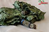 Банные веники из Канадского дуба, фото 3