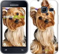 "Чехол на Samsung Galaxy J1 Mini J105H Йоркширский терьер с хвостиком ""930c-258"""