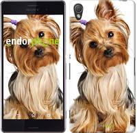 "Чехол на Sony Xperia Z3 D6603 Йоркширский терьер с хвостиком ""930c-58"""