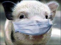 Чиновник назвал реальные причины распространения африканской чумы свиней