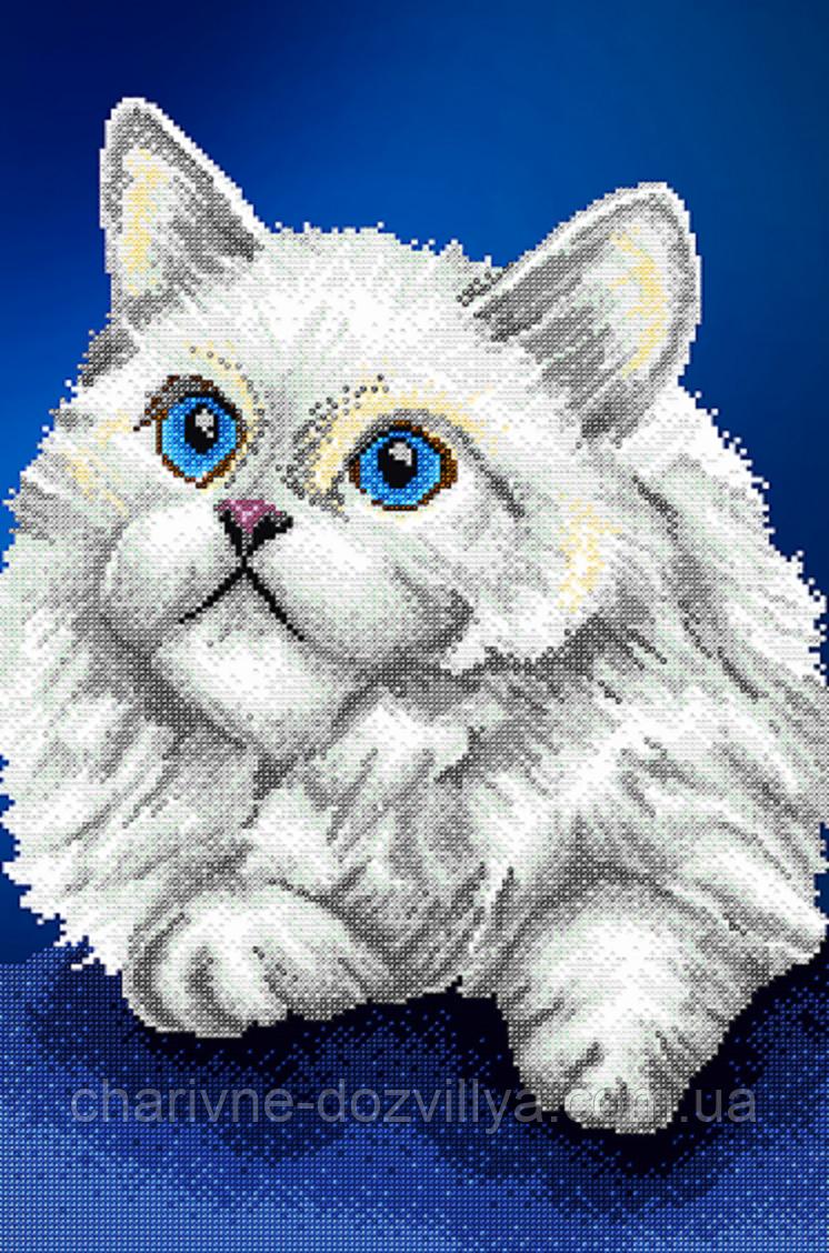Серия вышивки кота