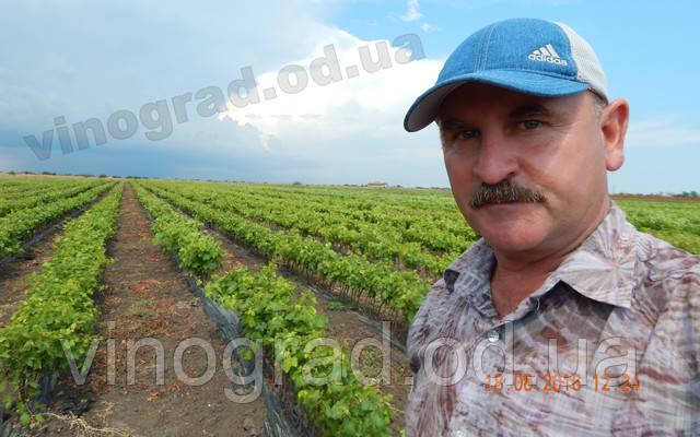 Прайс лист саженцев винограда из лнр