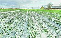 Черкасские аграрии обеспокоены состоянием озимых из-за погоды: появились подробности