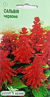 """Семена цветов Шалфей блестящий красный, многолетнее, 0,1 г, """"Елітсортнасіння"""""""