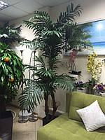 Пальма двойная 250 см