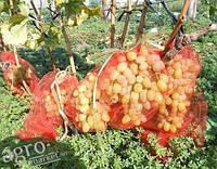 Сетка для защиты плодов от ос 280х400мм 50шт