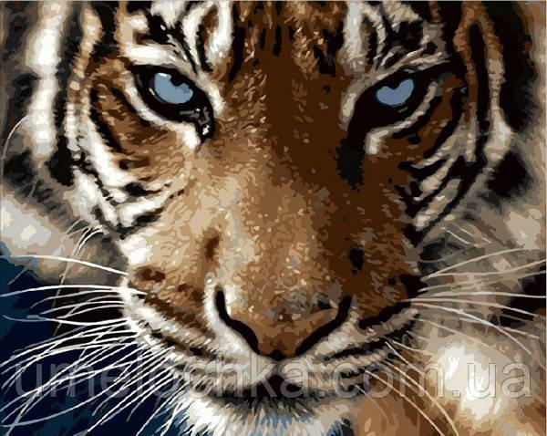 Раскрашивание по номерам Mariposa Взгляд тигра (MR-Q2082) 40 х 50 см