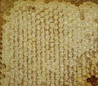 Мед в сотах разнотравье 1кг (урожай 2017 года)